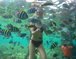 snorkle fish